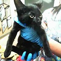 Adopt A Pet :: RAISIN - San Martin, CA