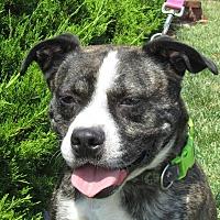 Adopt A Pet :: A080414 Spartacus - Overland Park, KS
