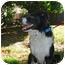 Photo 4 - Border Collie Dog for adoption in San Pedro, California - CHARLEY