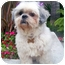 Photo 4 - Lhasa Apso Dog for adoption in Los Angeles, California - NELLIE