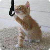 Adopt A Pet :: Garfield - Warren, MI