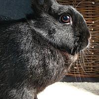 Adopt A Pet :: Ari - Newport, DE