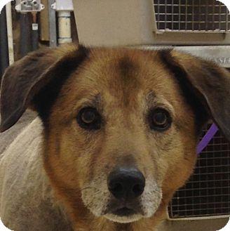 Retriever (Unknown Type) Mix Dog for adoption in Huntsville, Alabama - Dutchess