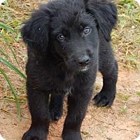 Adopt A Pet :: Chuck(6 lb) Fluffy Pup! - SUSSEX, NJ