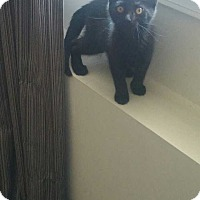 Adopt A Pet :: Noelle - Jackson, NJ