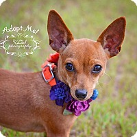 Adopt A Pet :: Gracie - Fort Valley, GA