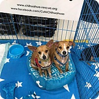 Adopt A Pet :: Millie and Tillie - Dallas, TX