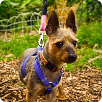 Adopt A Pet :: Mr. Trout - Frankfort, IL