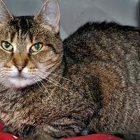 Adopt A Pet :: Zelda - Calais, ME
