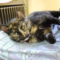 Adopt A Pet :: Meela - Farmington, ME