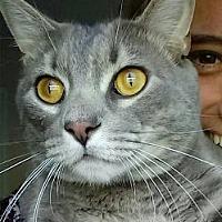Adopt A Pet :: Grayson - Jacksonville, FL