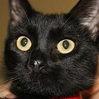 Adopt A Pet :: KARA - Clayton, NJ