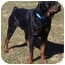 Photo 1 - Rottweiler Dog for adoption in Somerset, Pennsylvania - Chism