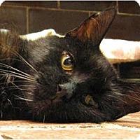 Adopt A Pet :: Clover - Centerburg, OH