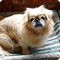 Adopt A Pet :: Snuffles - Sacramento, CA