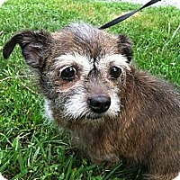 Adopt A Pet :: Mabel~Adopted - Troy, OH