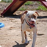 Adopt A Pet :: Maxx - Los Angeles, CA