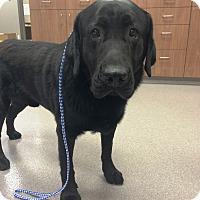 Adopt A Pet :: Buck - Cumming, GA