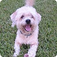 Adopt A Pet :: Mason - Sugarland, TX