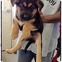 Adopt A Pet :: Bobby - Tampa, FL
