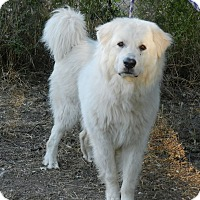 Adopt A Pet :: GUS - Granite Bay, CA