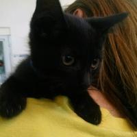 Adopt A Pet :: Elton - Belleville, MI