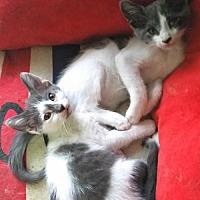 Adopt A Pet :: Cisco & Kidd - Knoxville, TN