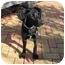 Photo 1 - Labrador Retriever Mix Dog for adoption in Metairie, Louisiana - LACEY