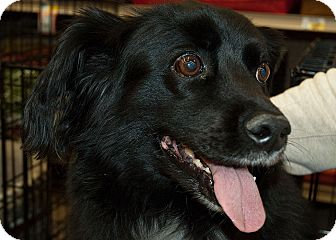 Spaniel (Unknown Type) Mix Dog for adoption in Richmond, Virginia - Mitzi and Pepper
