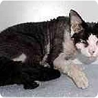 Adopt A Pet :: Minime - Scottsdale, AZ