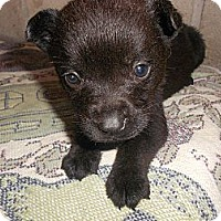Adopt A Pet :: Brad - San Diego, CA