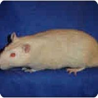 Adopt A Pet :: Zeus - Winner, SD