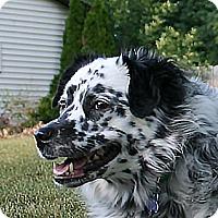 Adopt A Pet :: Lilly - Holland, MI