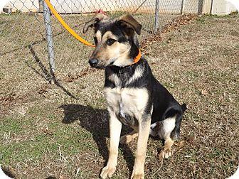 Shepherd (Unknown Type) Mix Dog for adoption in Thomaston, Georgia - Velma