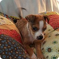 Adopt A Pet :: Babou - Knoxville, TN