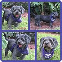 Adopt A Pet :: Mushroom - hollywood, FL