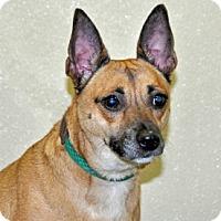 Adopt A Pet :: Rose - Port Washington, NY