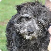 Adopt A Pet :: Athena - Tumwater, WA
