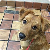 Adopt A Pet :: Flynn - Norman, OK