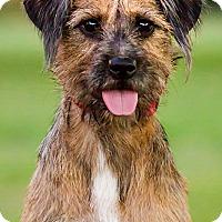 Adopt A Pet :: Grace- DRD program - Owensboro, KY