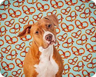 Staffordshire Bull Terrier Mix Dog for adoption in ROSENBERG, Texas - Kimba