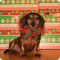 Adopt A Pet :: Trebble - Decatur, GA