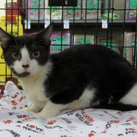 Adopt A Pet :: Kansas - Ellicott City, MD