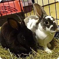 Adopt A Pet :: Tatum - Woburn, MA