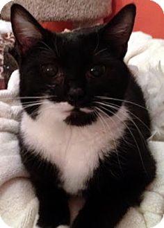 Domestic Mediumhair Kitten for adoption in Alexandria, Virginia - Peach