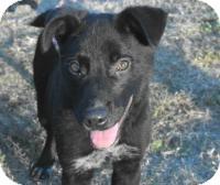 Border Collie/Australian Shepherd Mix Dog for adoption in Perkins, Oklahoma - *URGENT* Cowboy