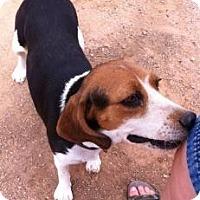 Adopt A Pet :: Sassy Rae - Phoenix, AZ