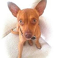 Adopt A Pet :: REX - calimesa, CA