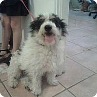 Adopt A Pet :: Jack - Chandler, AZ