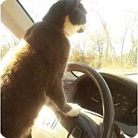 Adopt A Pet :: Zoe the Magnificient - Seneca, SC
